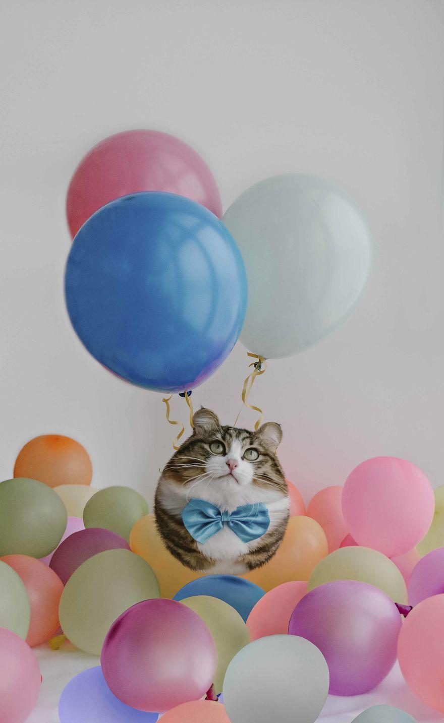 funny animal photo manipulation cat aditya aryanto