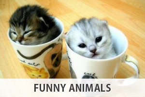 funny-animals-